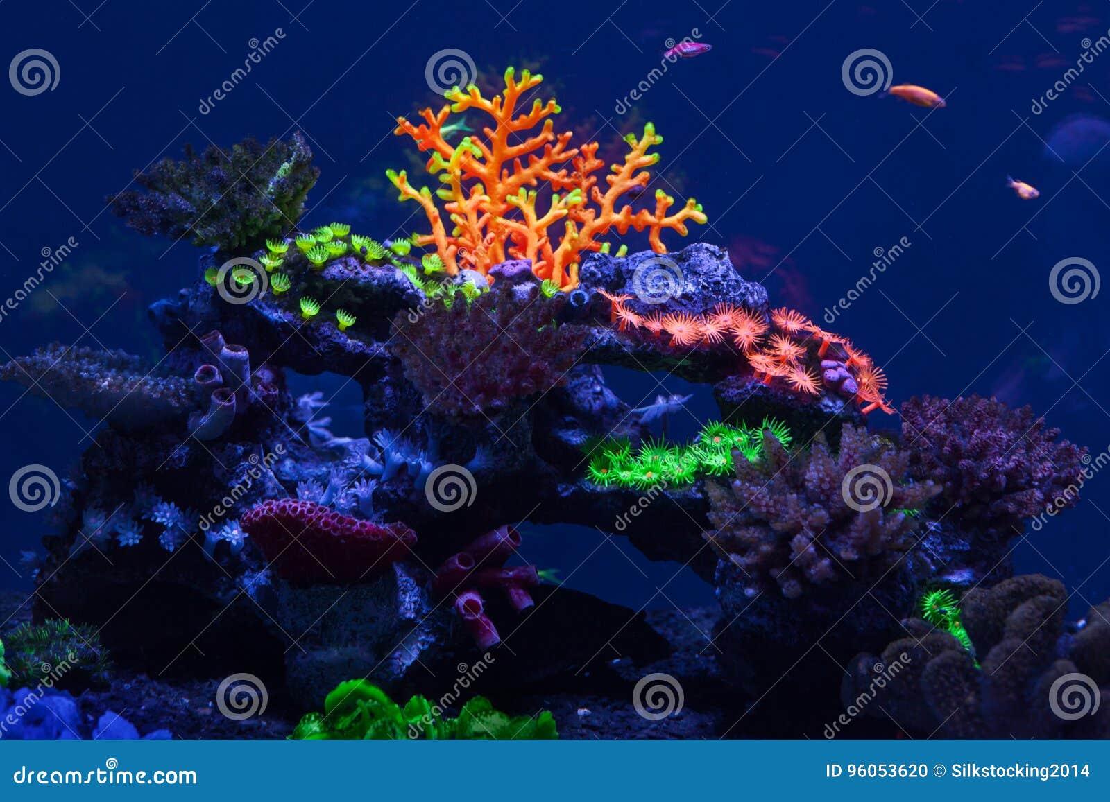 Coraux multicolores sous l eau