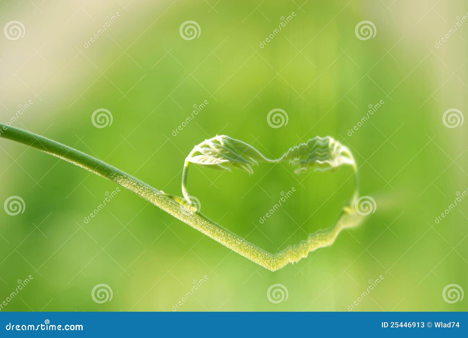 Corazón de la naturaleza