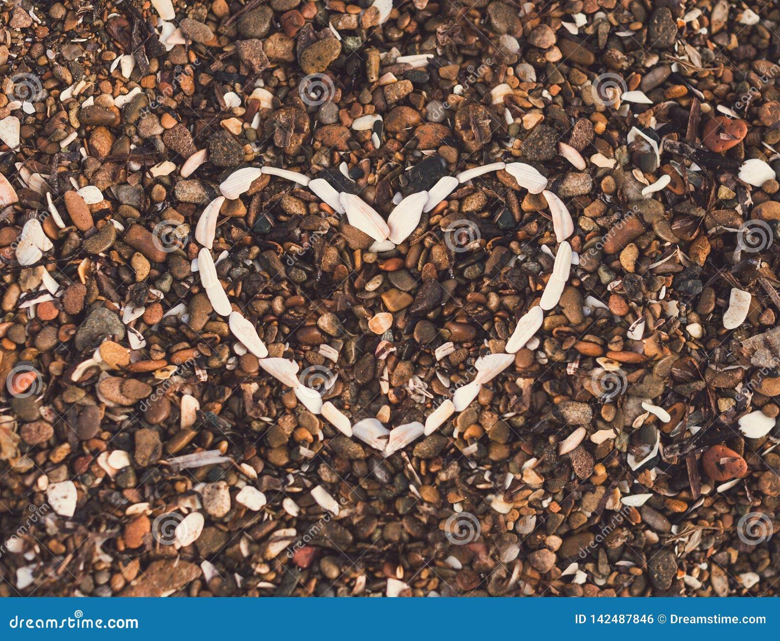 Corazón del fondo de las conchas marinas