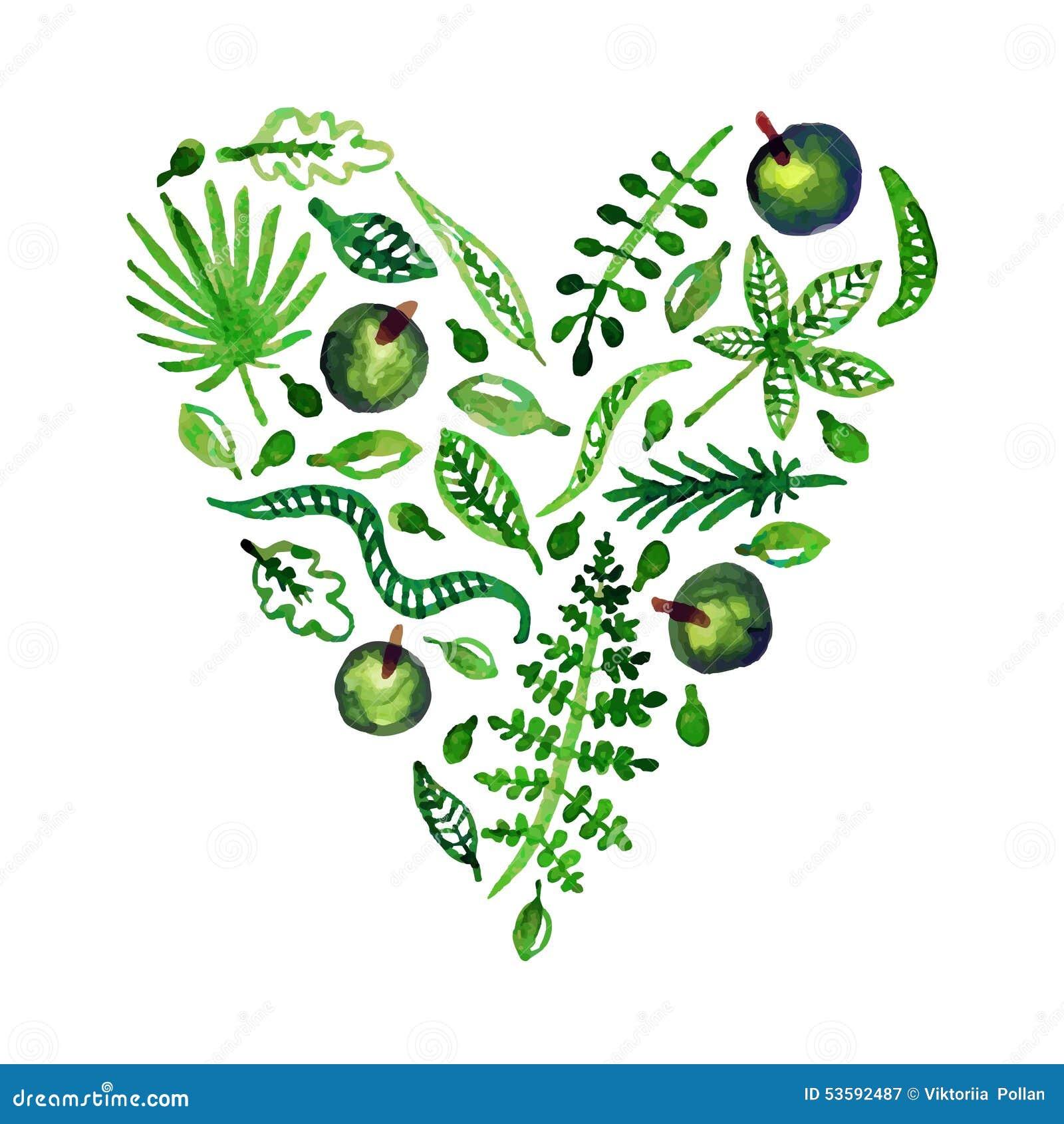 Corazón del vector de la naturaleza de la acuarela con las hojas, las manzanas y otras plantas (verde) Perfeccione para las invit