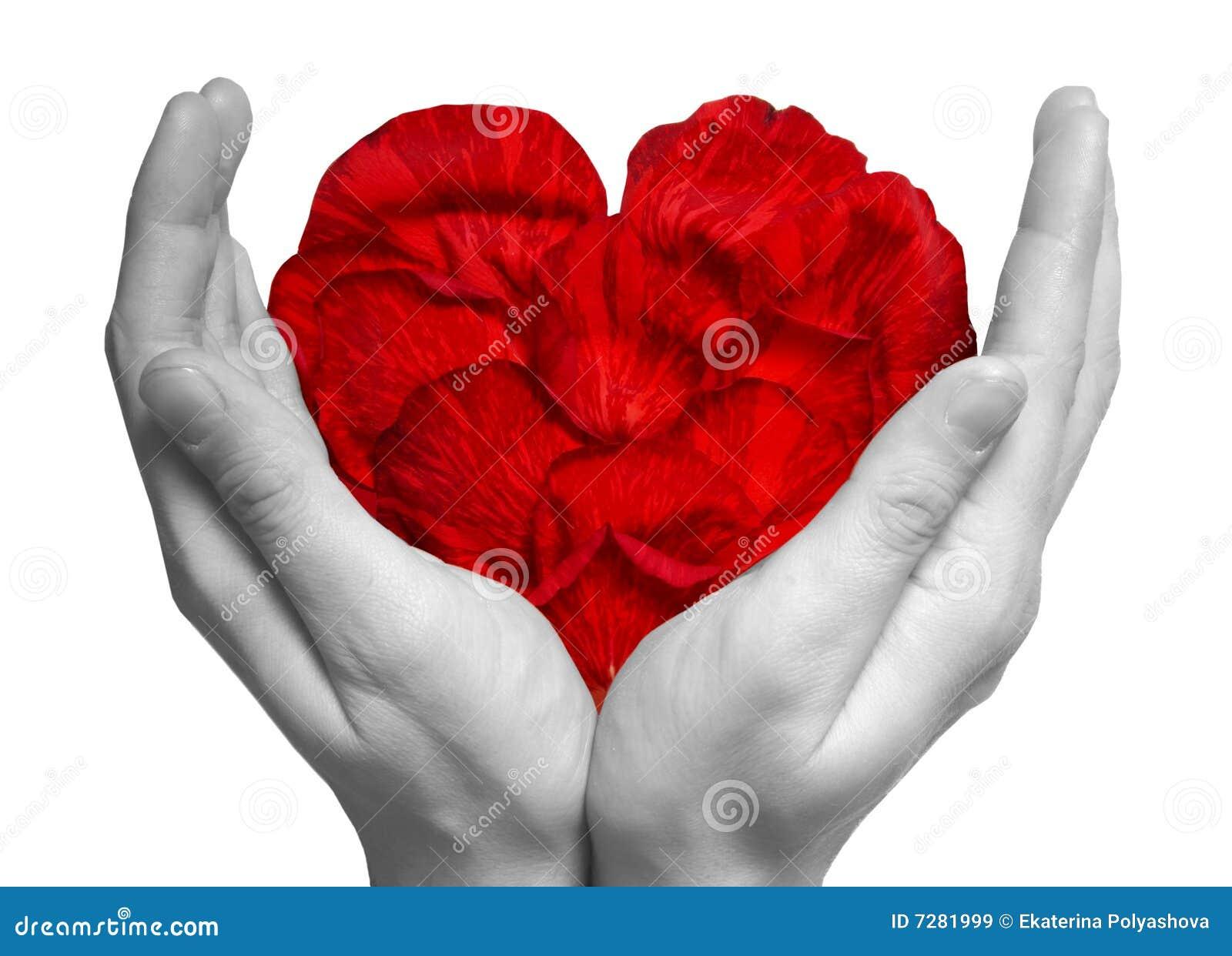 Corazón hecho de los pétalos de rosa rojos en las manos
