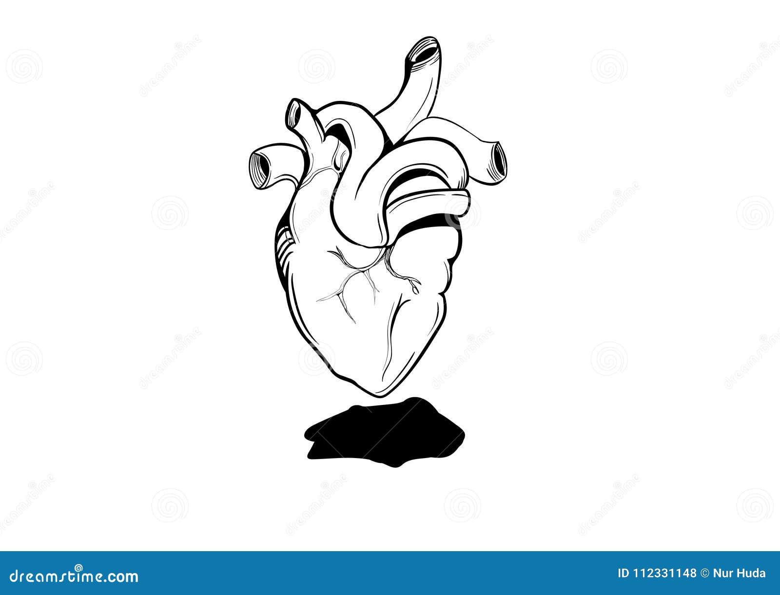 Corazón Humano De Dibujo Con El Estilo Del Garabato Para El Dibujo