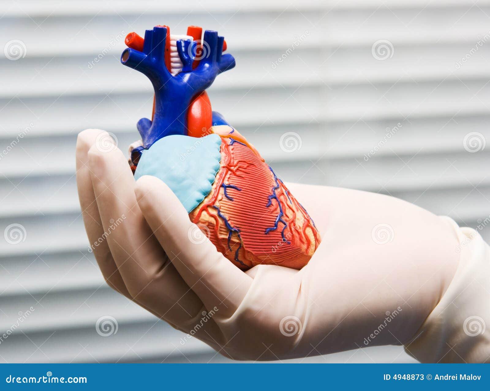 Atractivo Fotos De Corazón Humano Con Etiquetas Composición ...