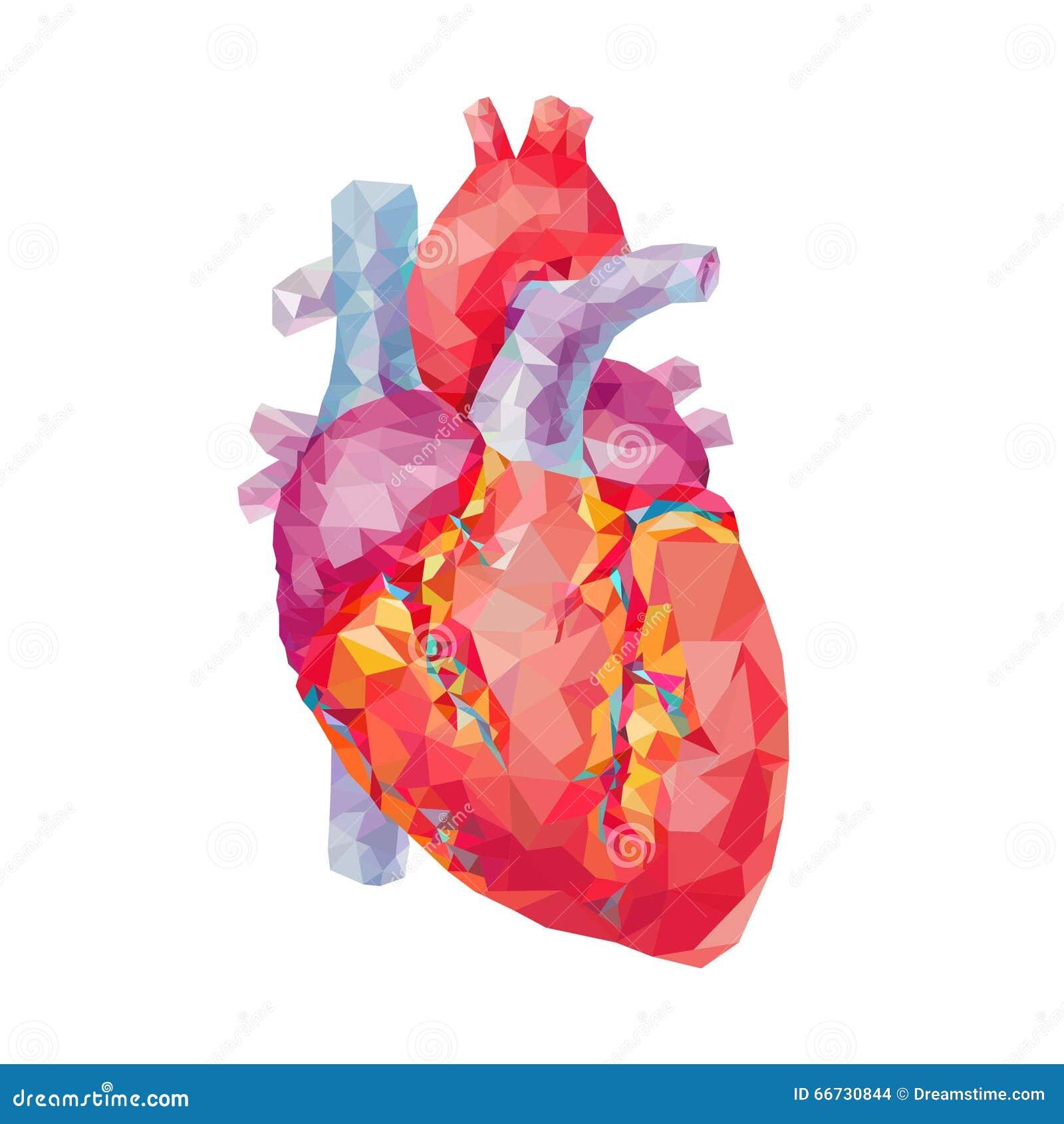 Corazón humano Gráficos poligonales Ilustración del vector