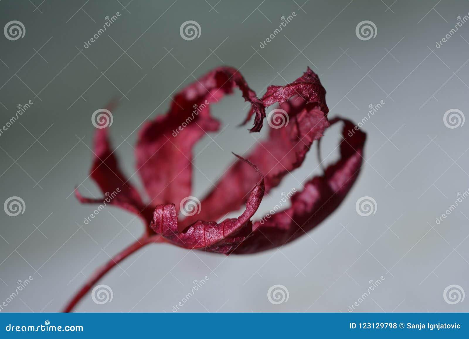 Corazón rojo hecho de hojas