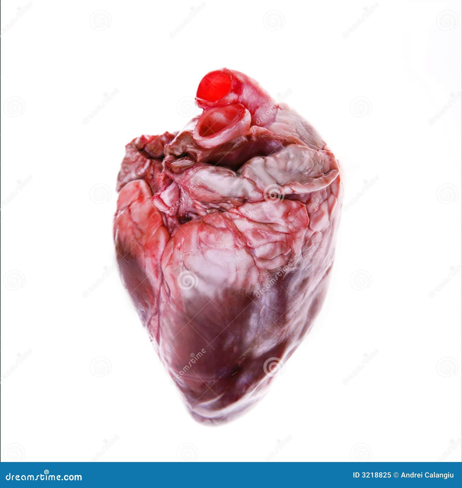 Corazón verdadero