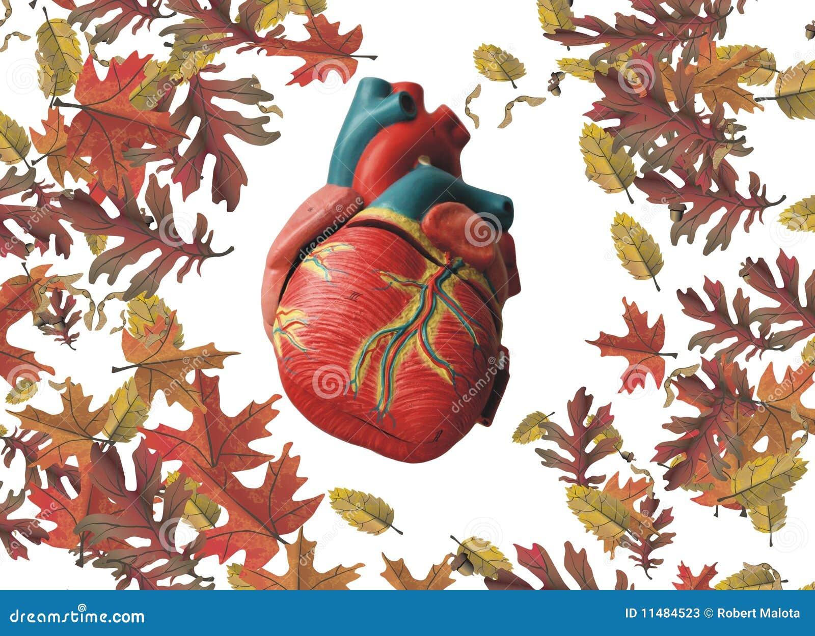 Corazón y hojas