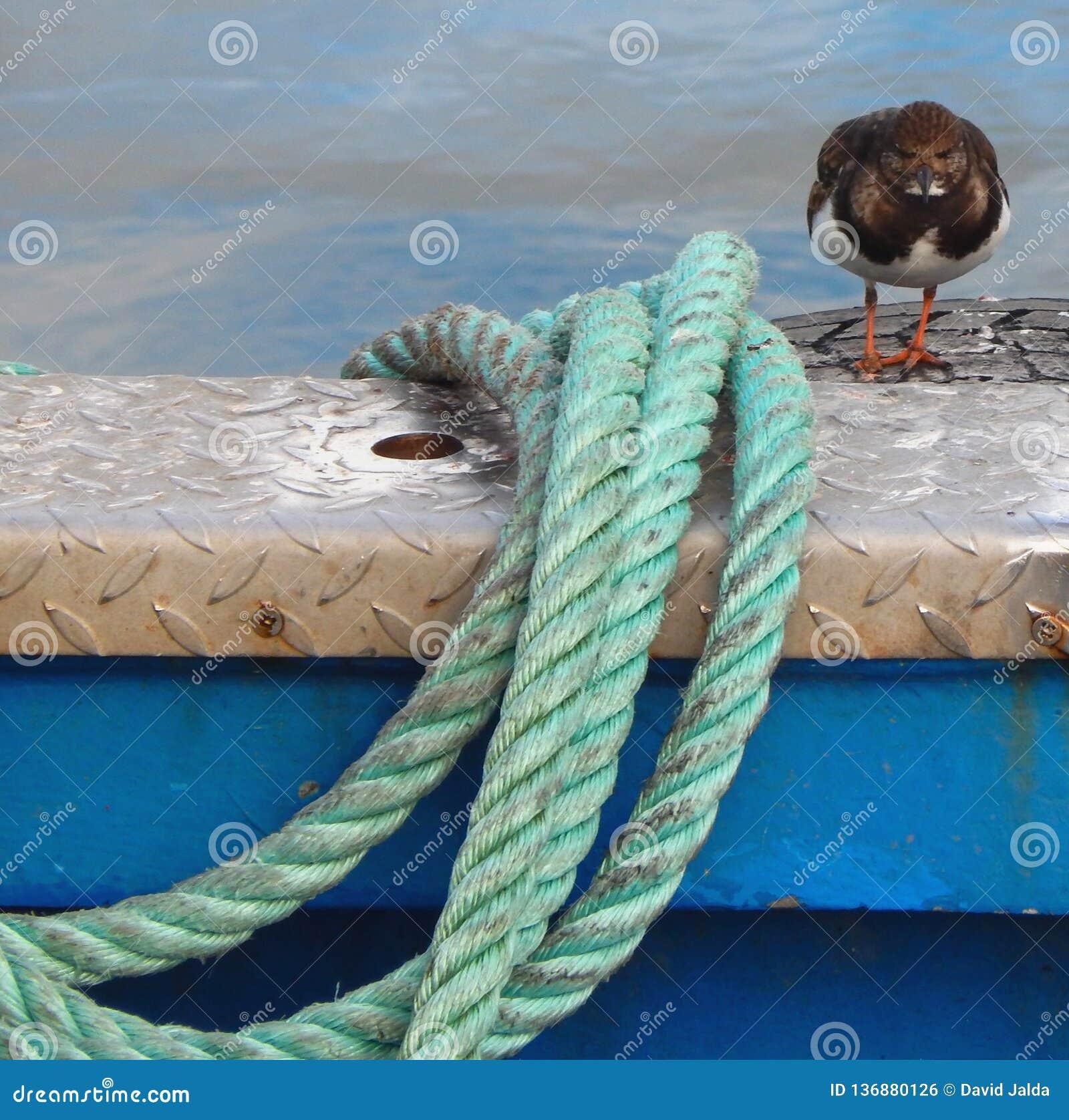 Corda ed uccello sulla barca