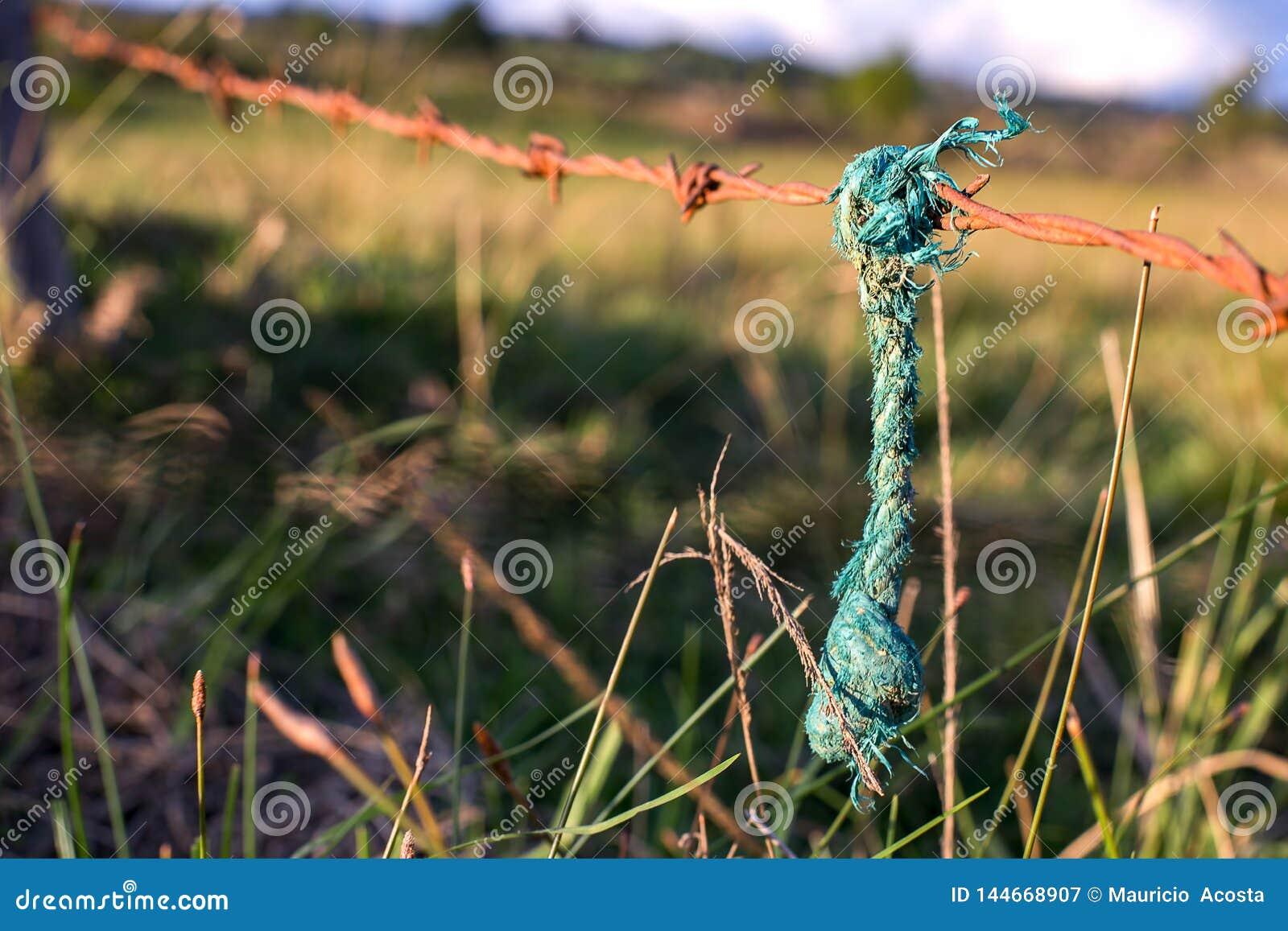 Corda verde que pendura de uma farpa oxidada prendida