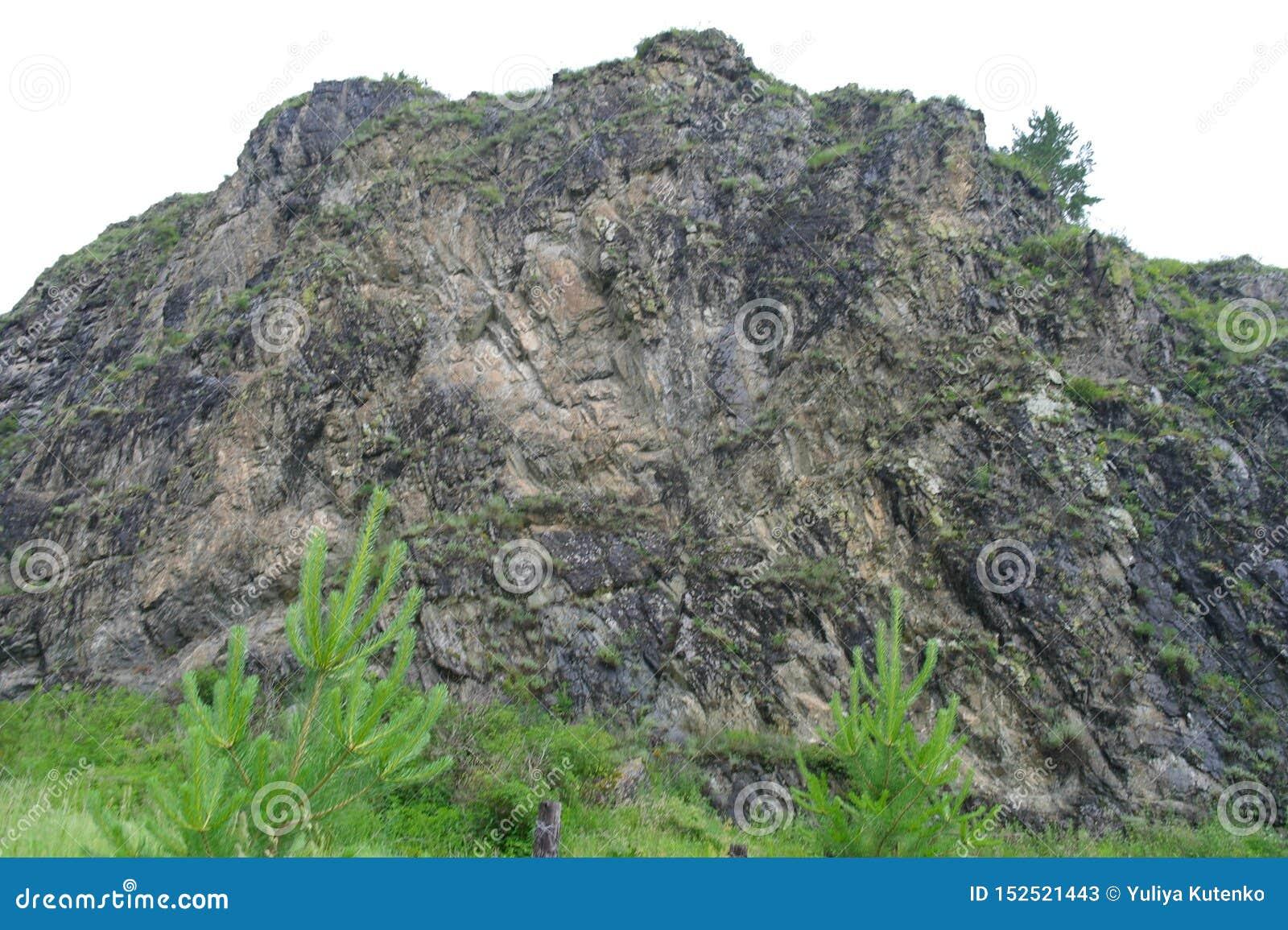 Cordilheira centenário, rocha coberta com as hortaliças