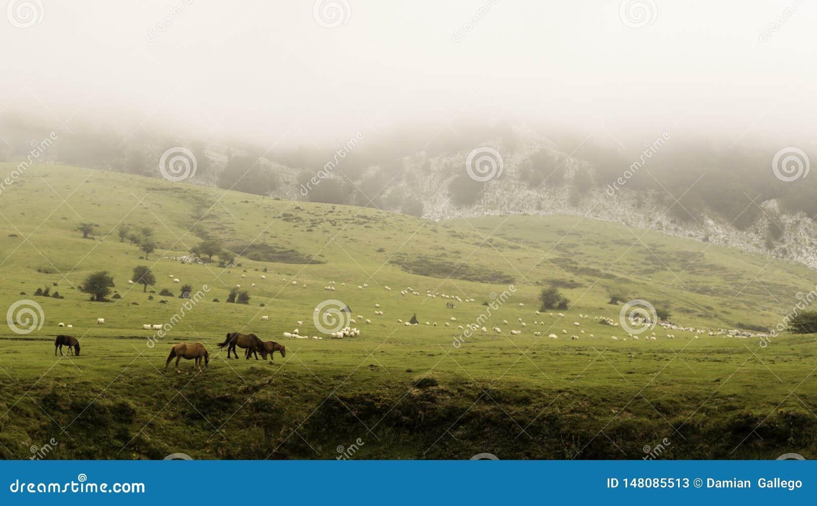Cordillera de Gorbea, con niebla, en país vasco, con la manada de vacas y de ovejas en prado