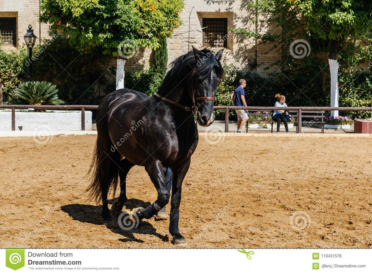 1 594 Beautiful Horse Stables Photos Free Royalty Free Stock Photos From Dreamstime
