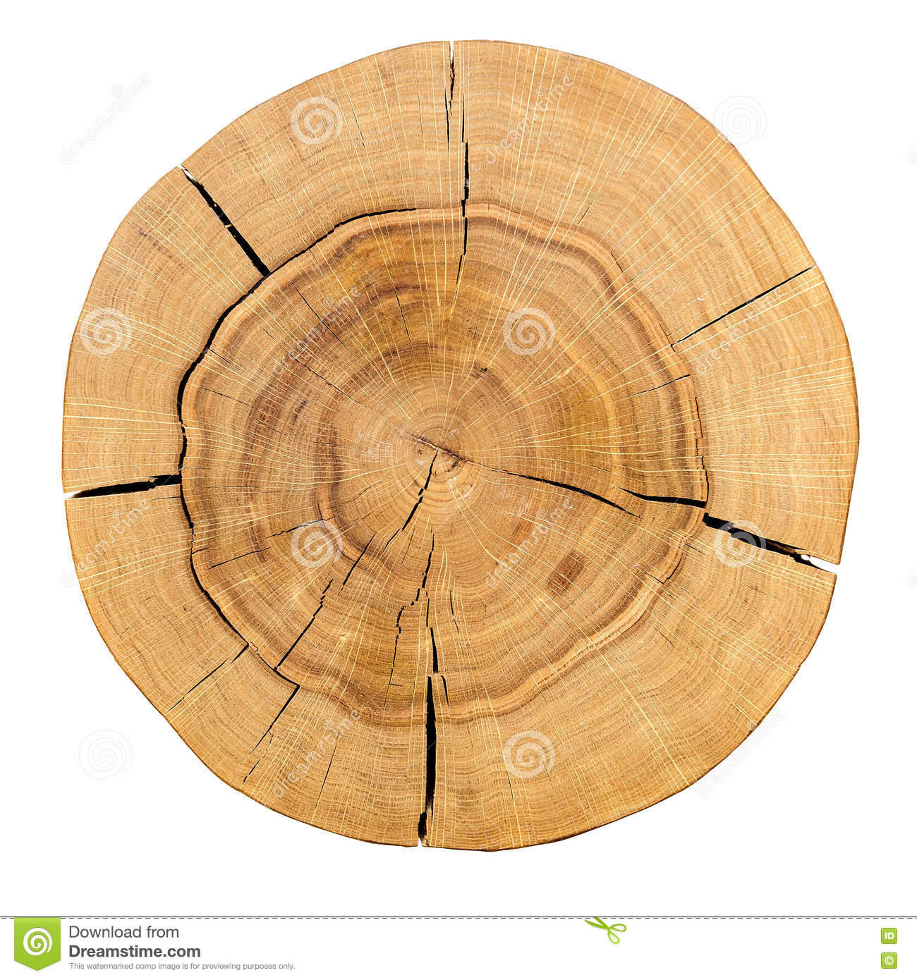 Core Of A Wooden Log Isolated On A White Background Top