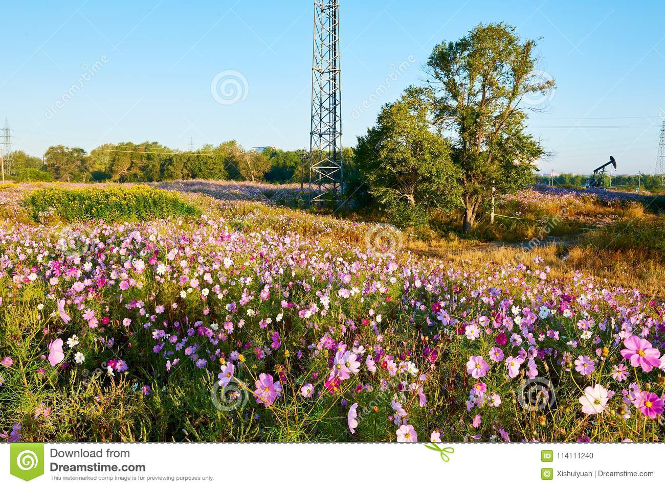 The Coreopsis Flowers And Trees On The Hillside Stock Photo - Image ...