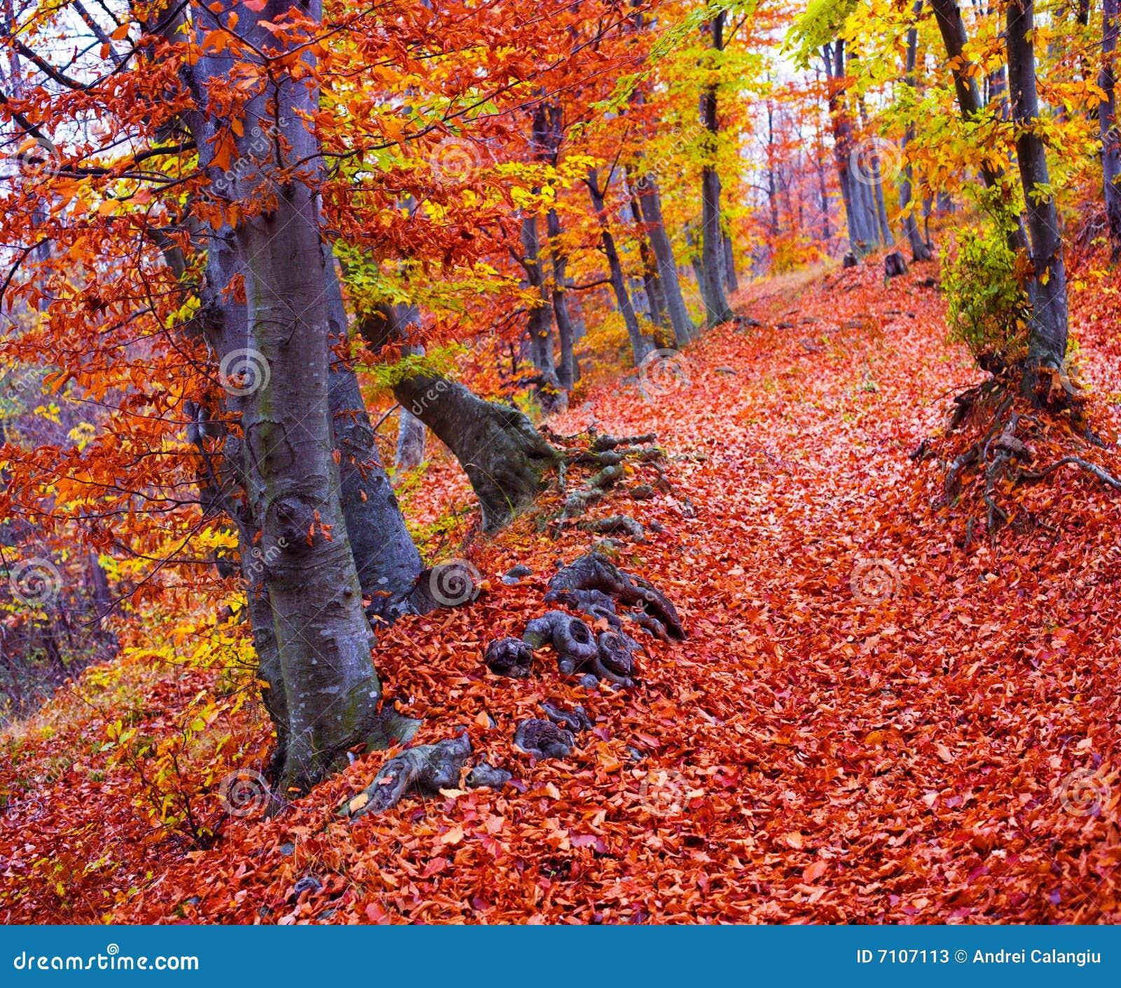 Cores da floresta da queda