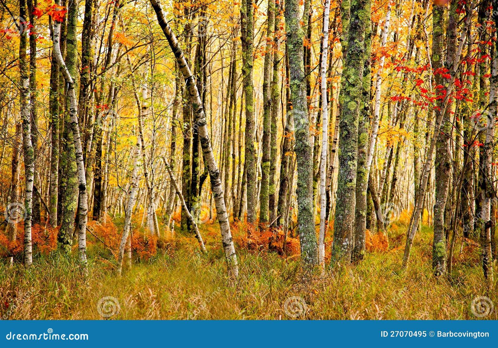 Cores da queda da floresta nacional do Acadia.