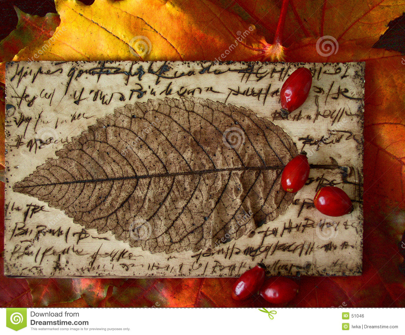 Cores do outono - folha & hawthorn