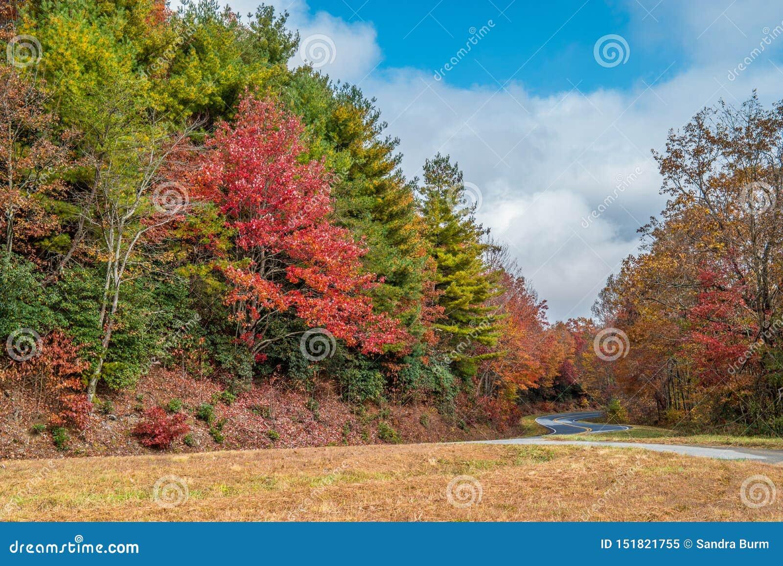 Cores do outono nas montanhas