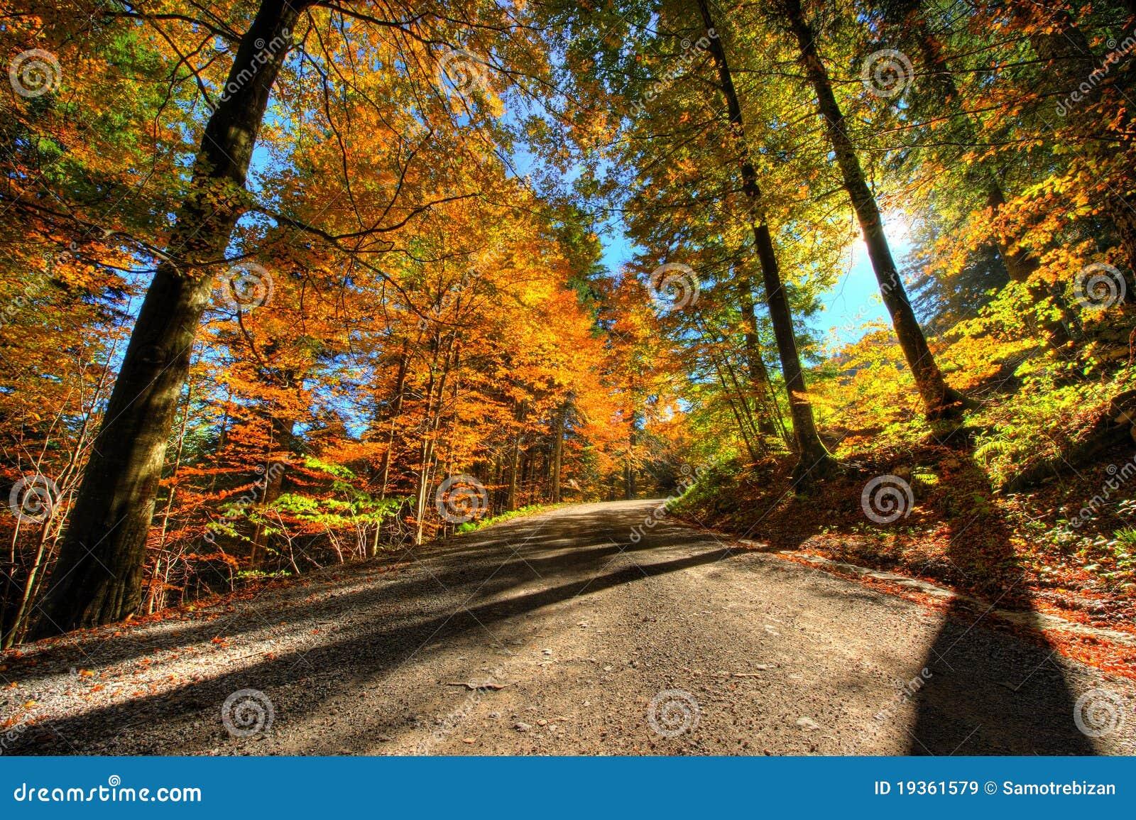 Cores vibrantes da floresta no outono