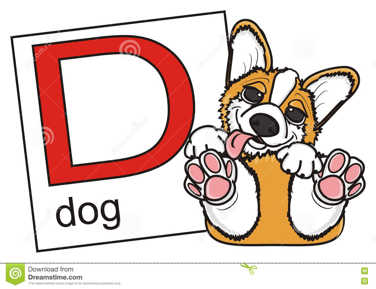 Corgi and a card with the letter D