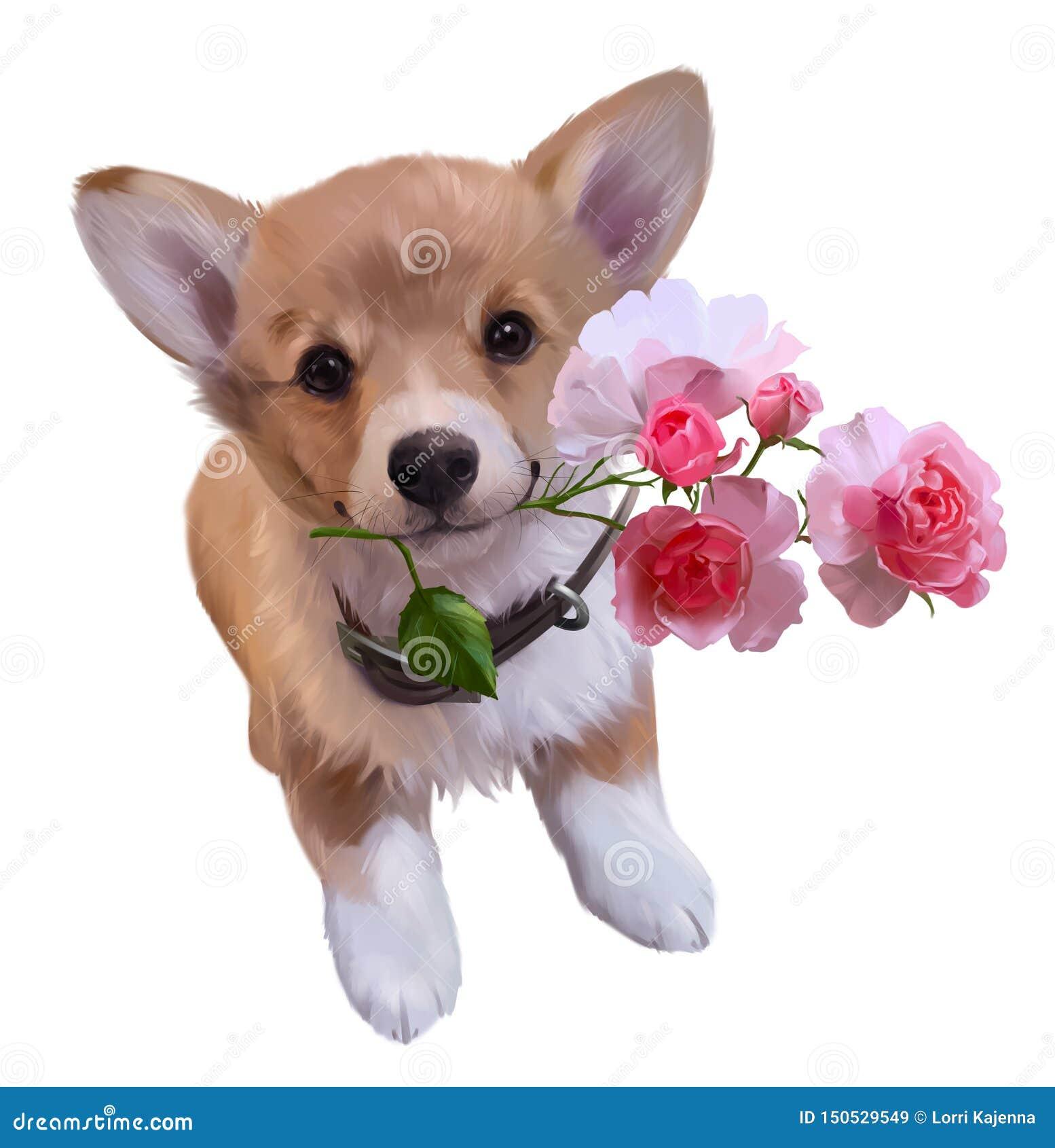 Corgi Puppy And Rose Branch Watercolor Drawing Stock Illustration Illustration Of Cute Mammal 150529549