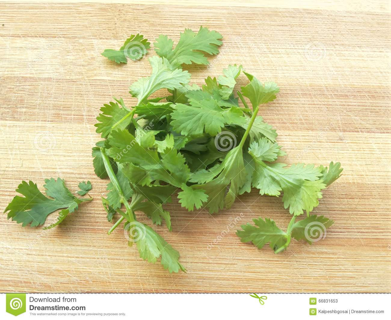 Coriander Leaves Heap On Wooden Background Stock Photo