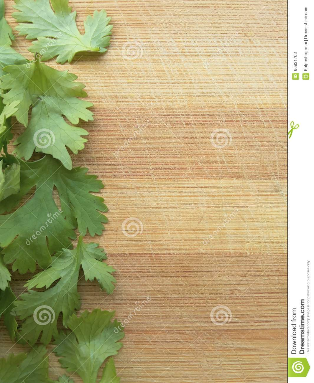 Coriander Leaves Line On Wooden Background Stock Photo