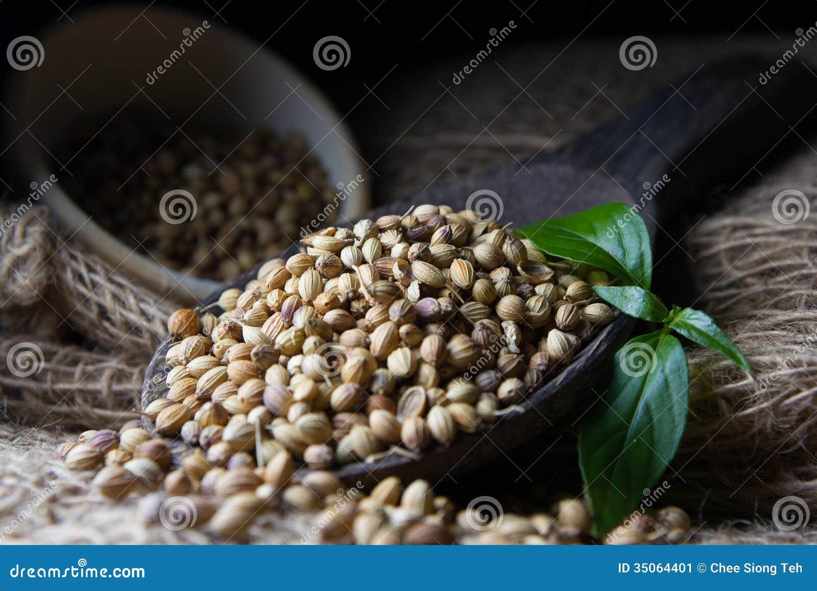 Coriander Seed Stock Image Image 35064401