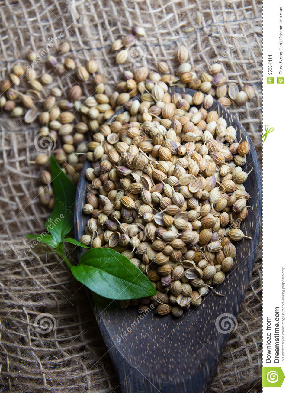 Coriander Seed Stock Images Image 35064414