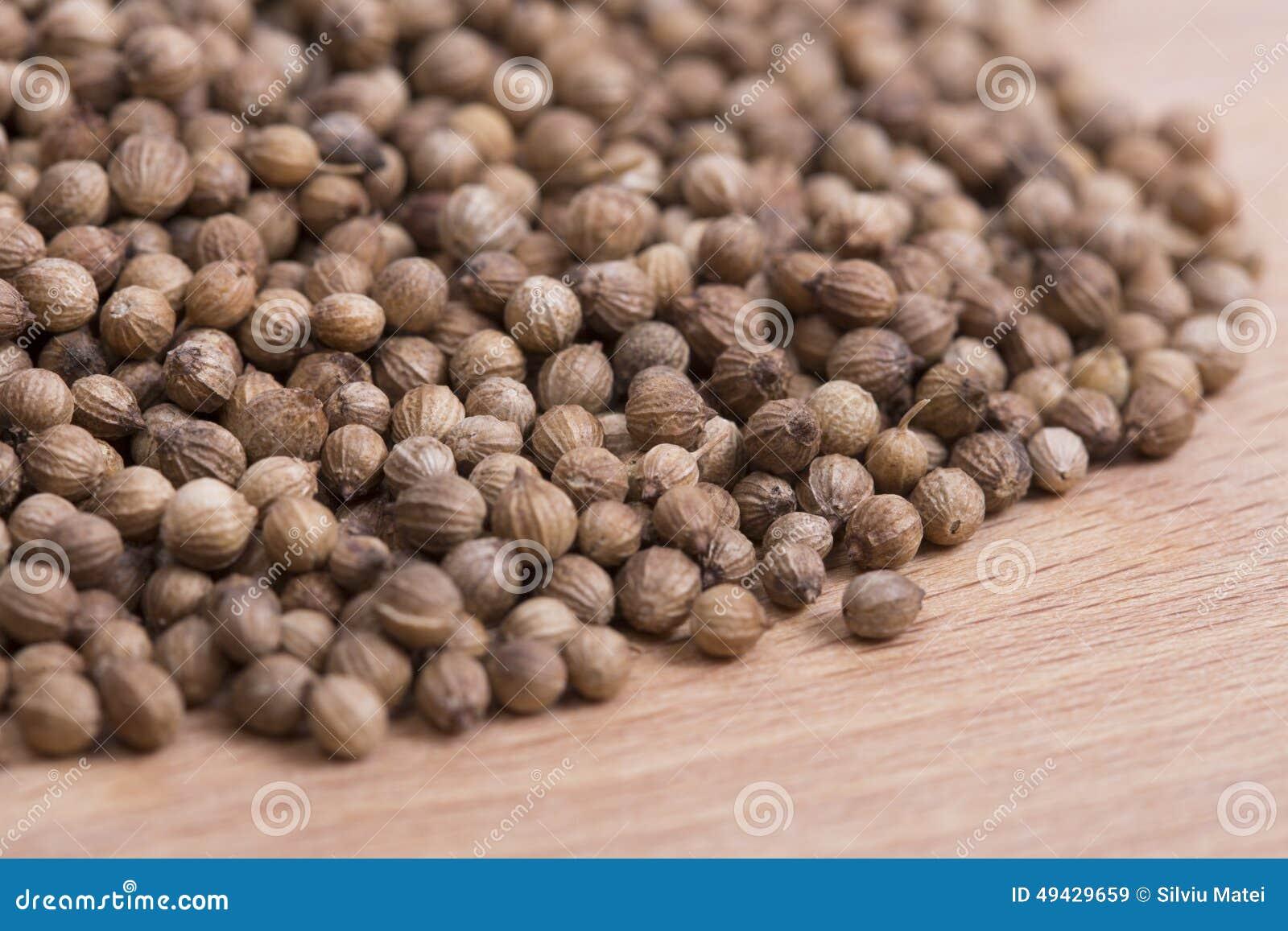 Coriander Seeds Stock Photo Image 49429659