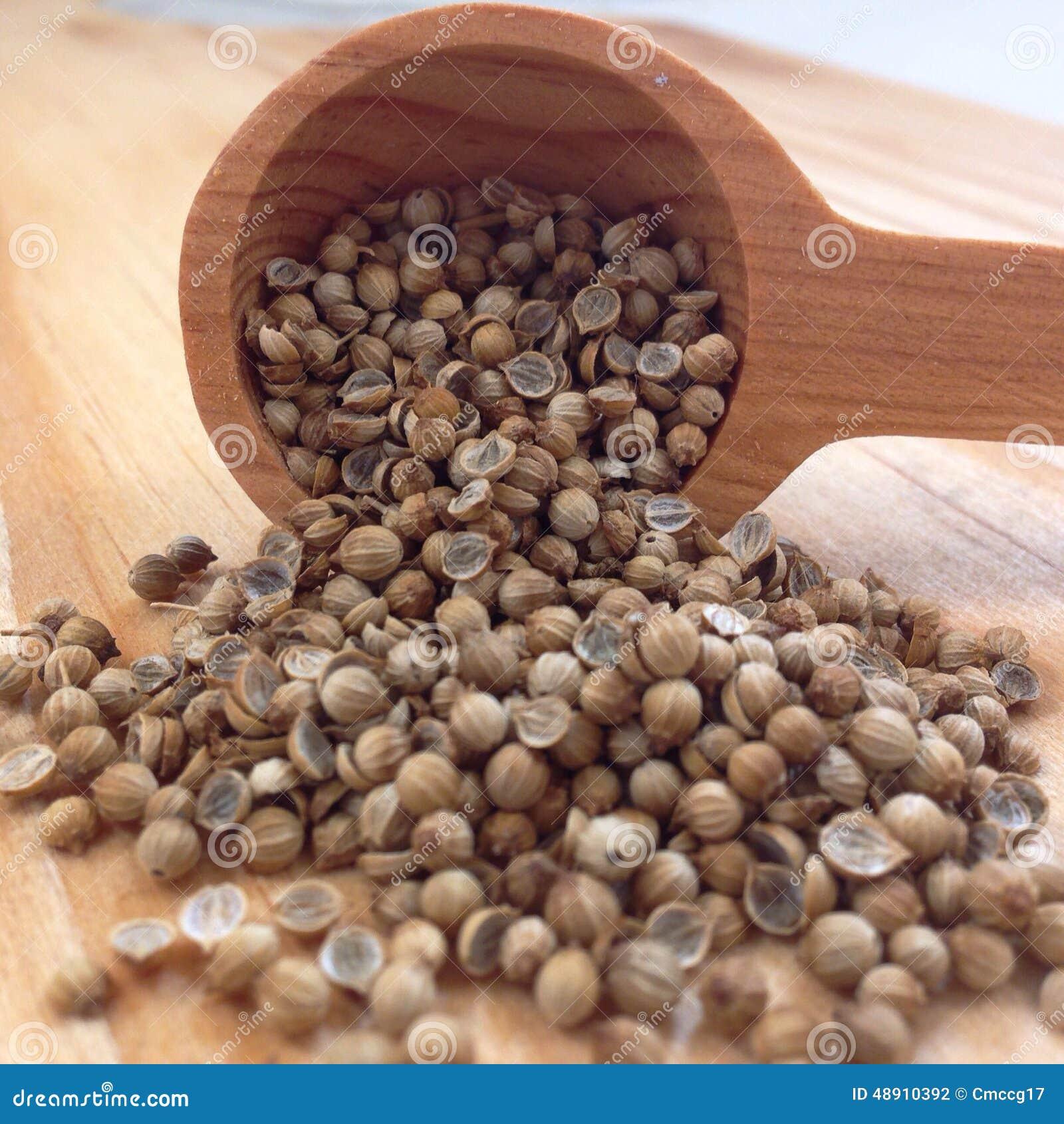 Coriander Seeds Stock Photo Image 48910392
