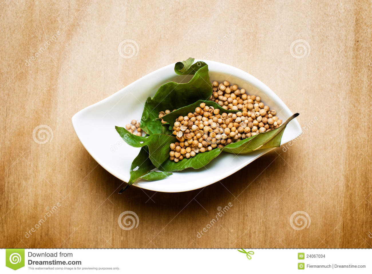 Coriander On A Wood Table Stock Images Image 24067034