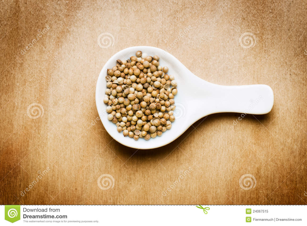 Coriander On A Wood Table Royalty Free Stock Photo Image