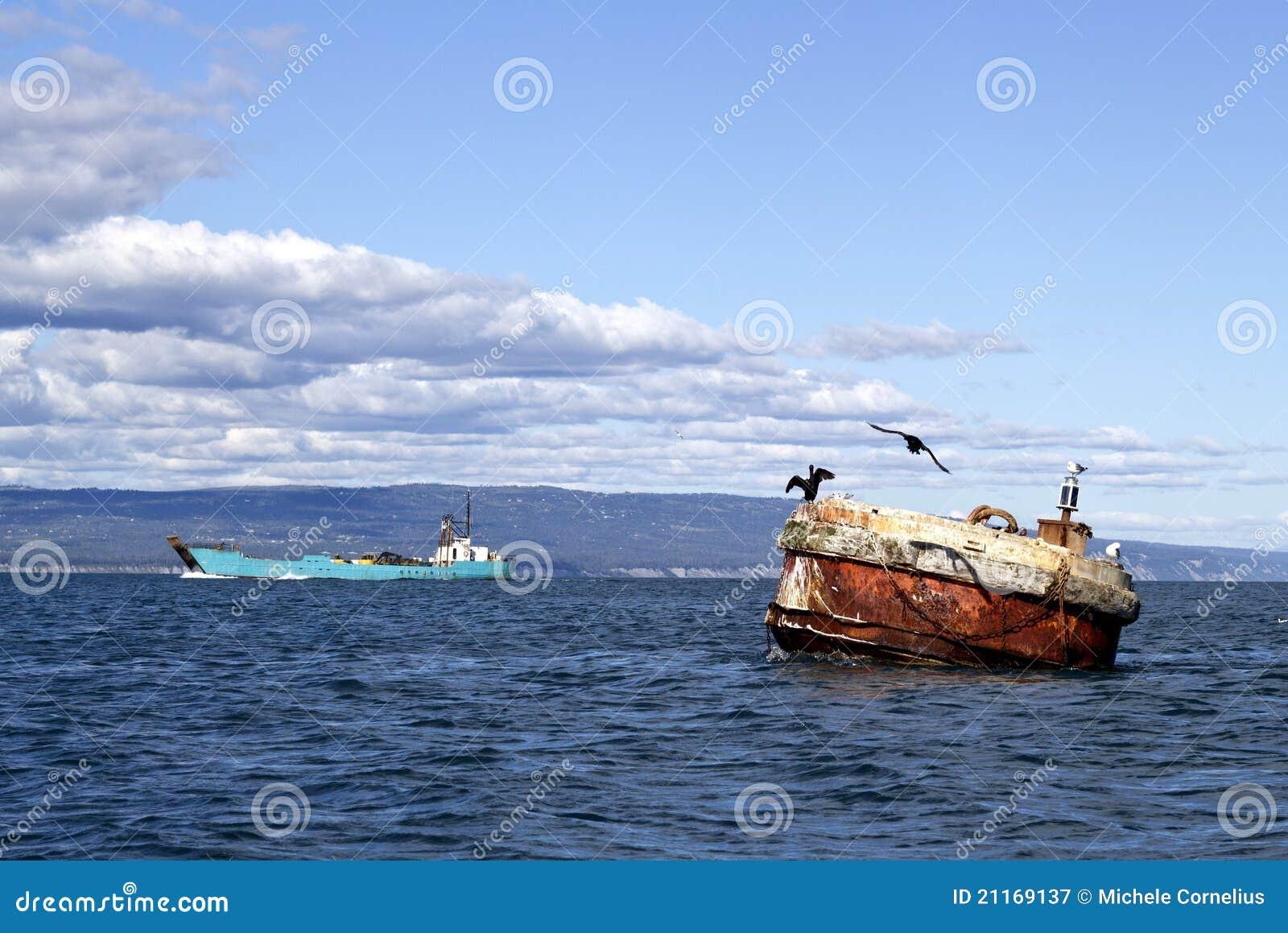 Cormoranes en una boya en la bahía
