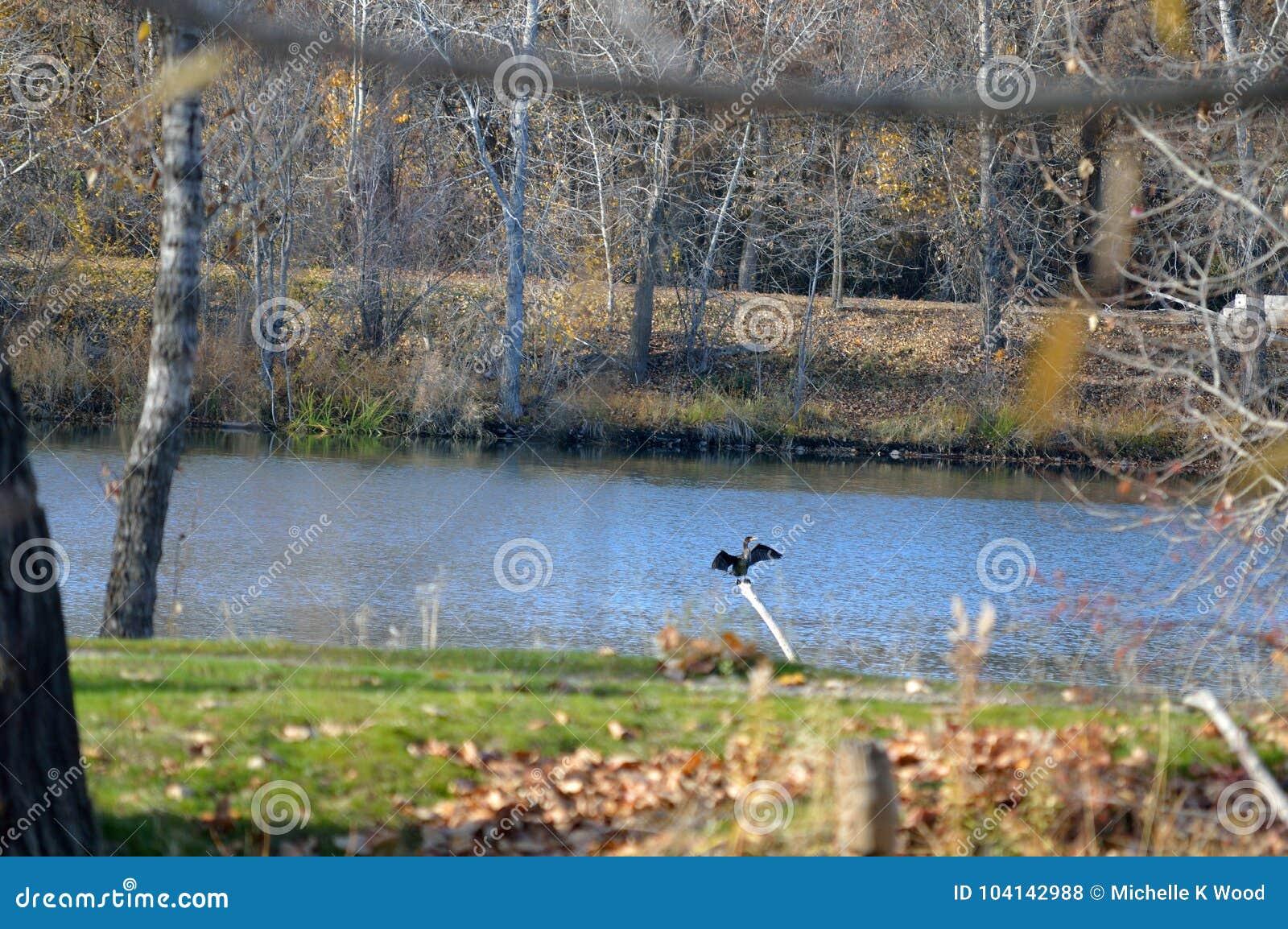 Cormorant perched on a pole