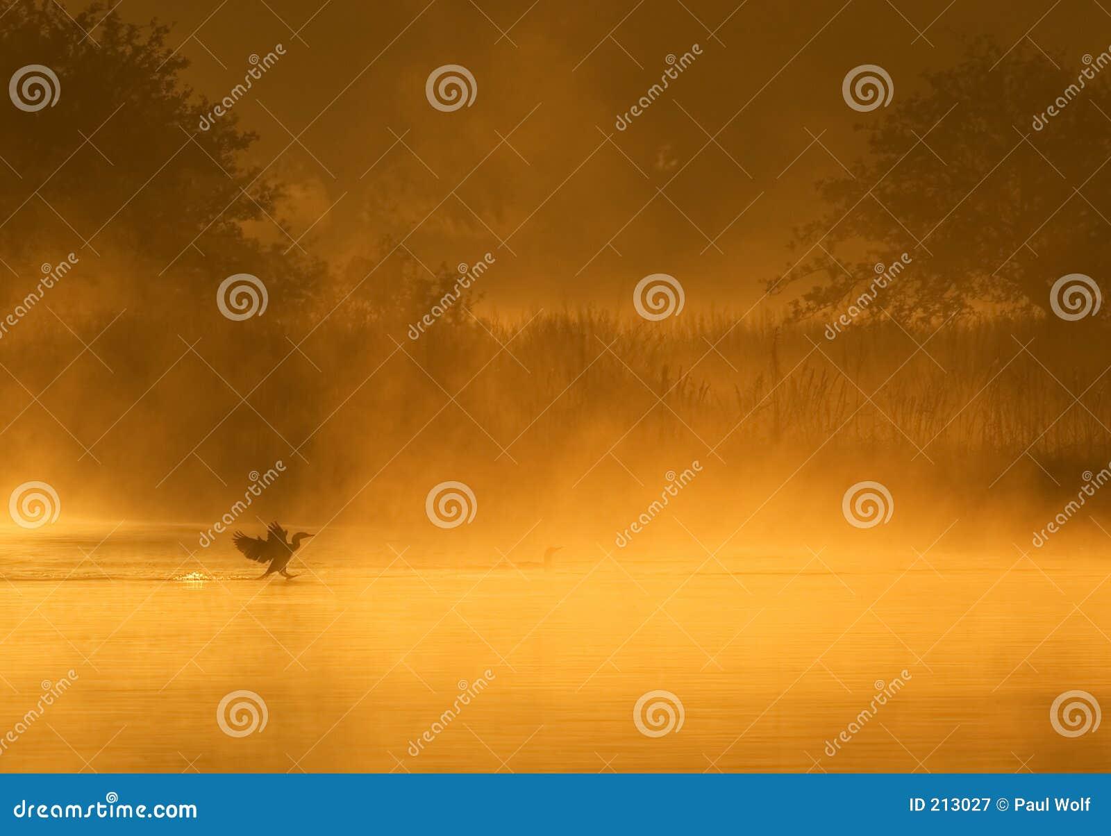 Cormorantlandning