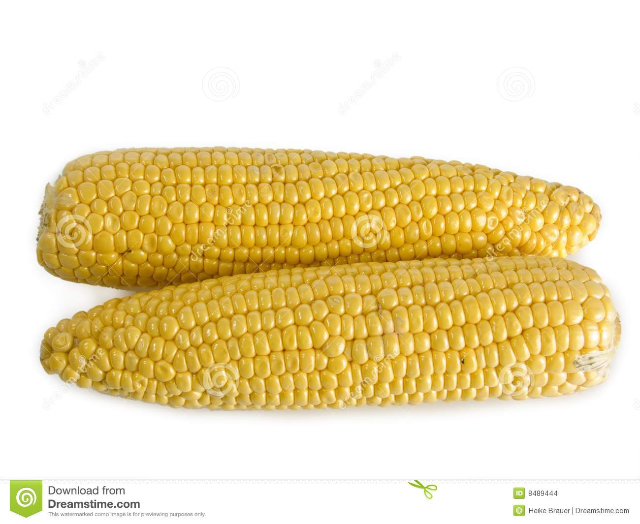 Corn Stock Photo Image Of Yellow Crop Nutrition