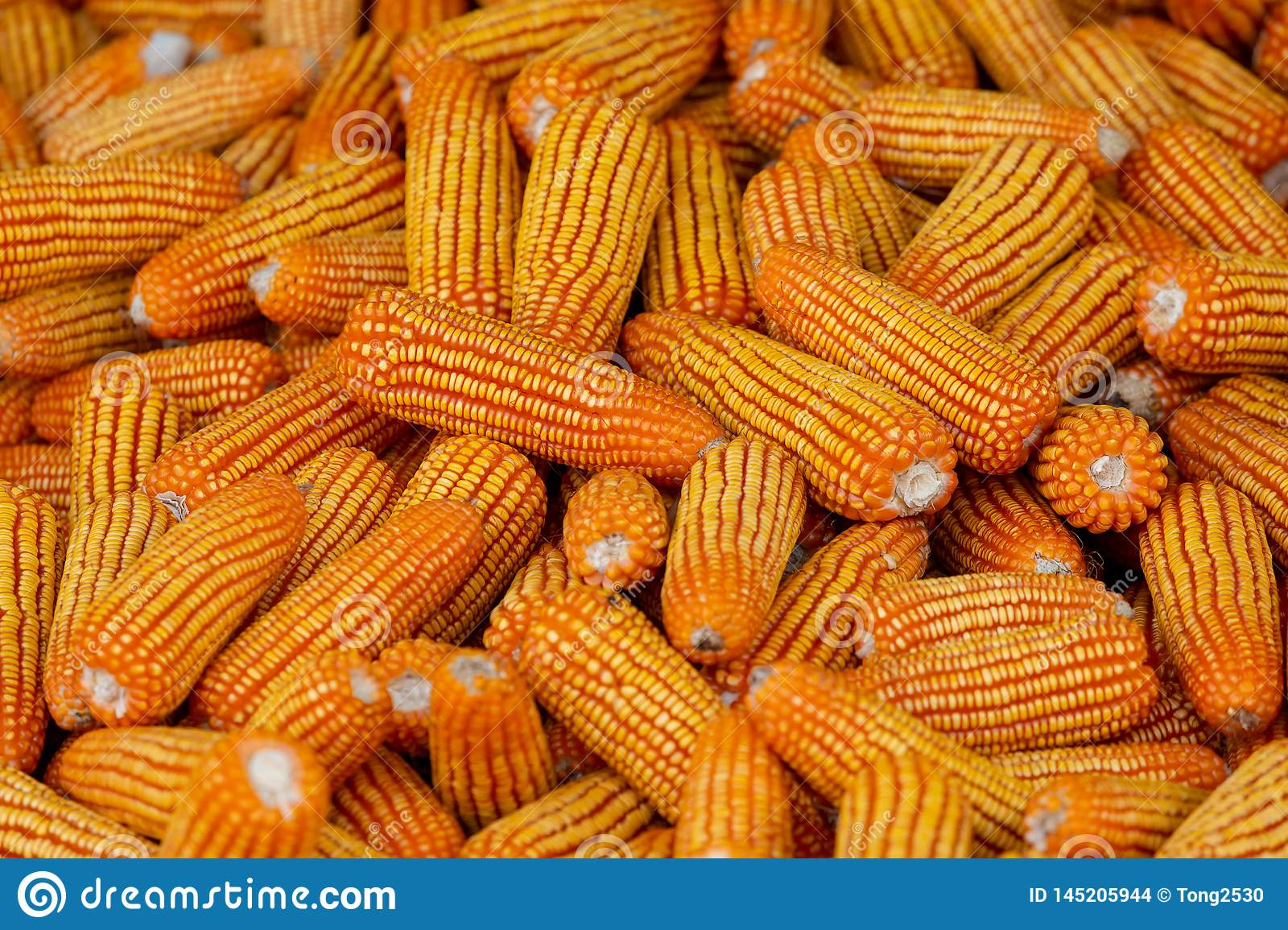 Corn For Animal Feed, Corn Texture  Yellow Corns As