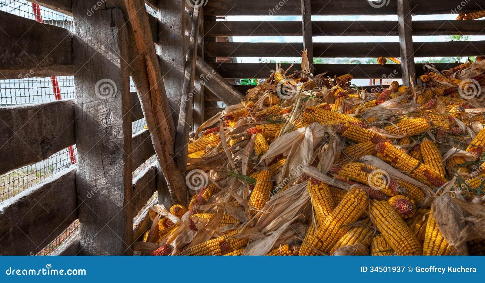 Corn Crib Pile Royalty Free Stock Photography Image