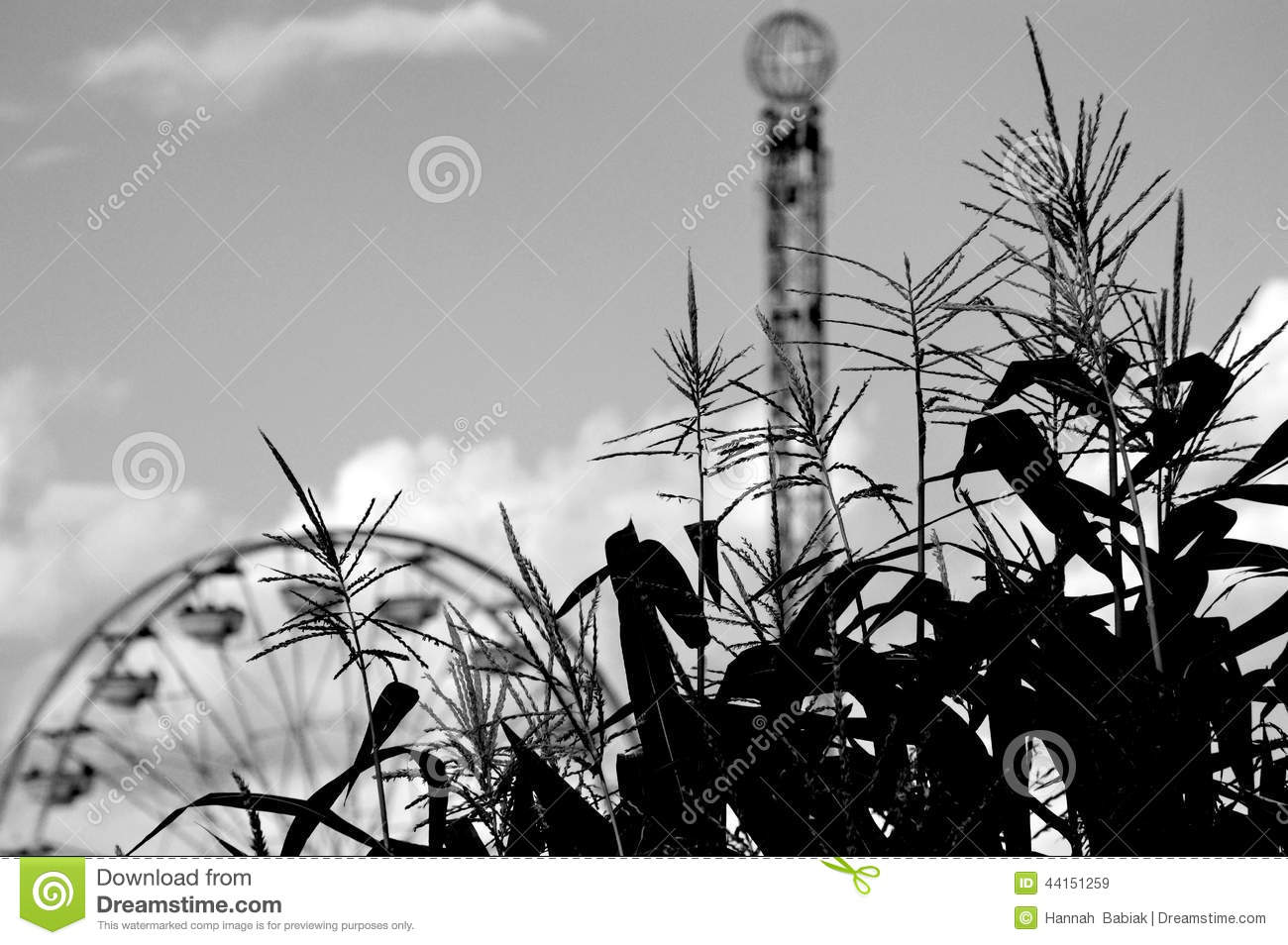 Corn with Ferris Wheel and Drop Tower