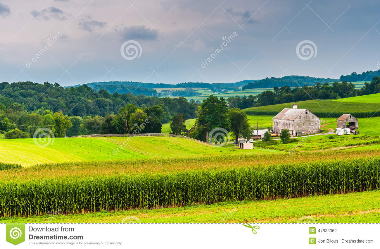 Corn Field And Barn On A Farm, In Rural York County ...