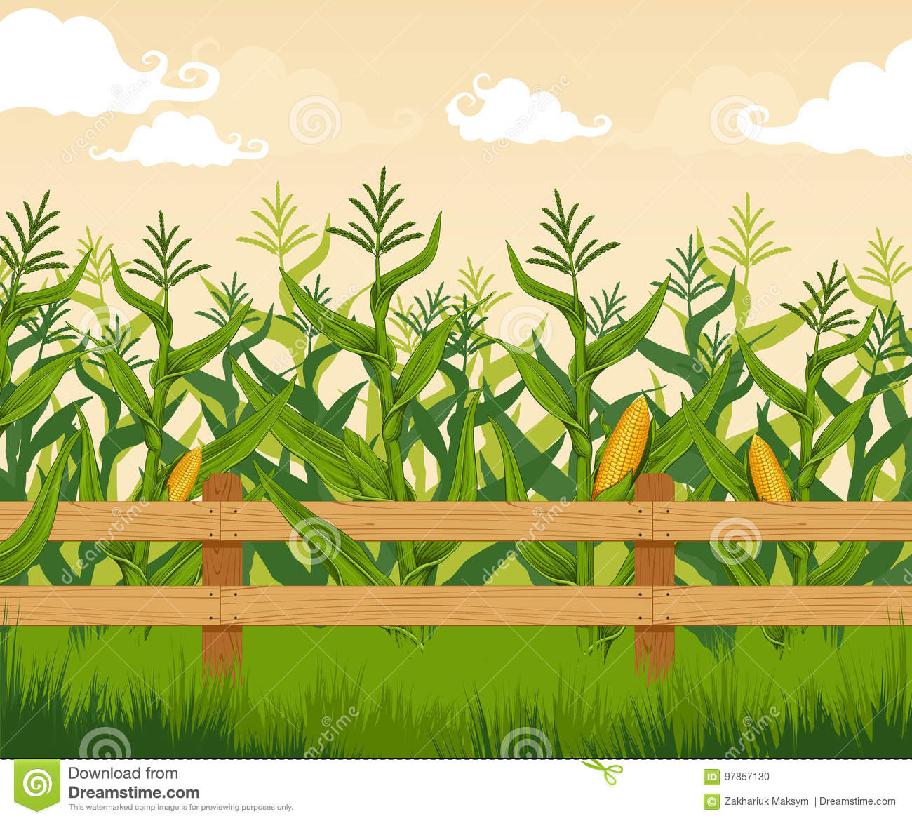 Corn Cartoons Illustrations Amp Vector Stock Images 51543