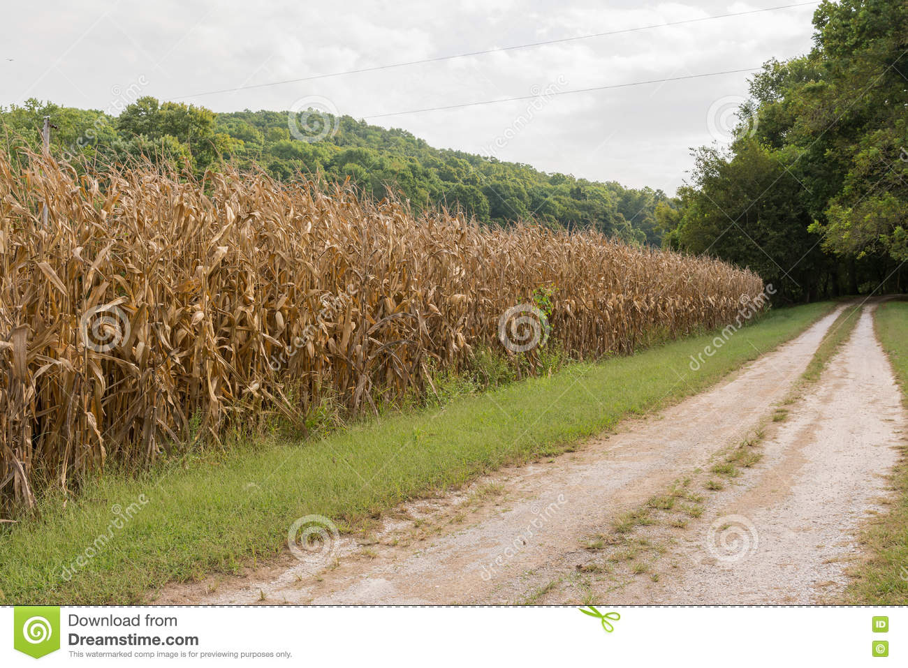 Dating a farmer during harvest