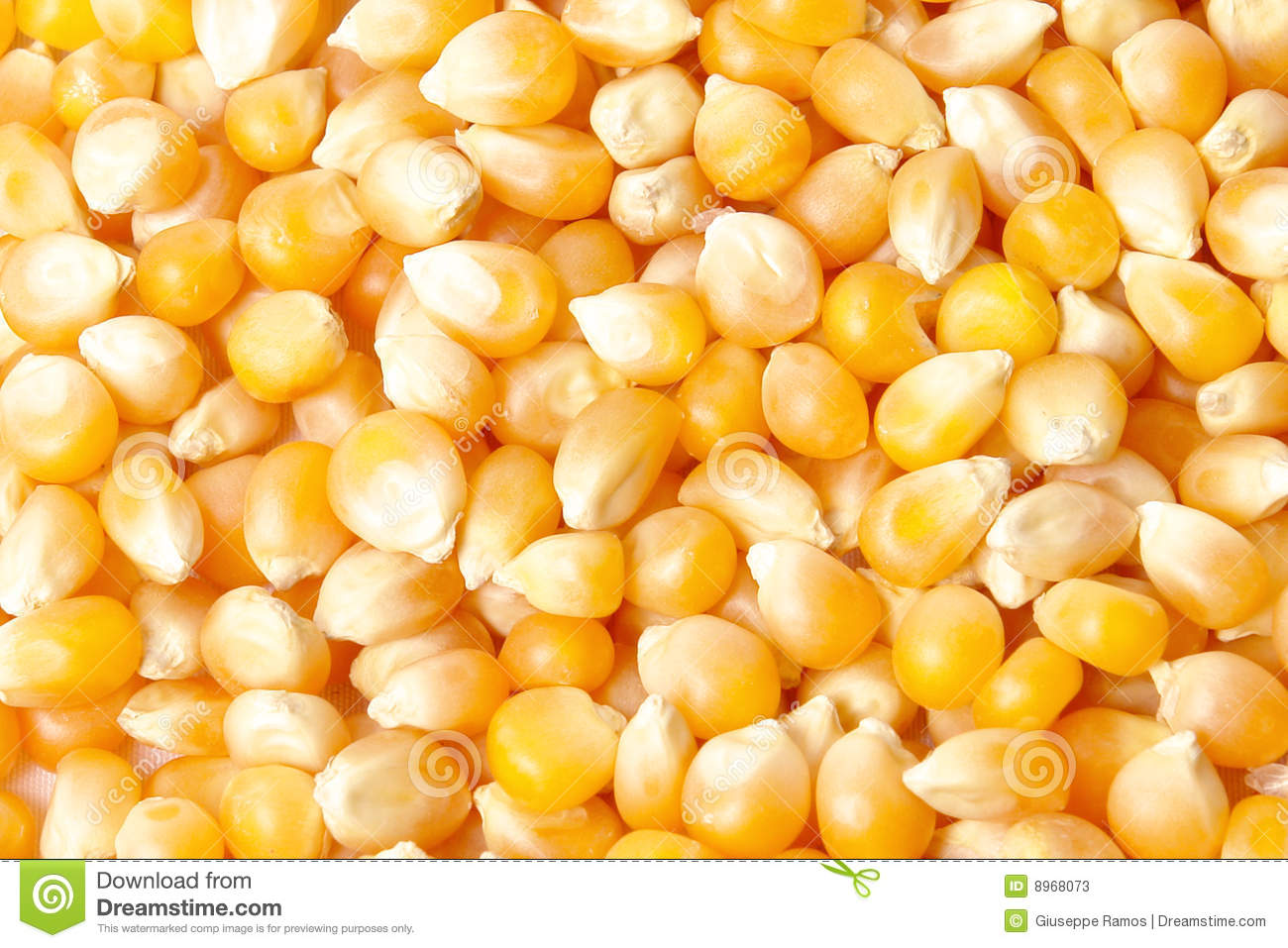 maize online dating Not to be confused with maze, maize wikivividly wiki as never seen before with video and photo galleries, discover something new today  dating from ca 1100 bc .