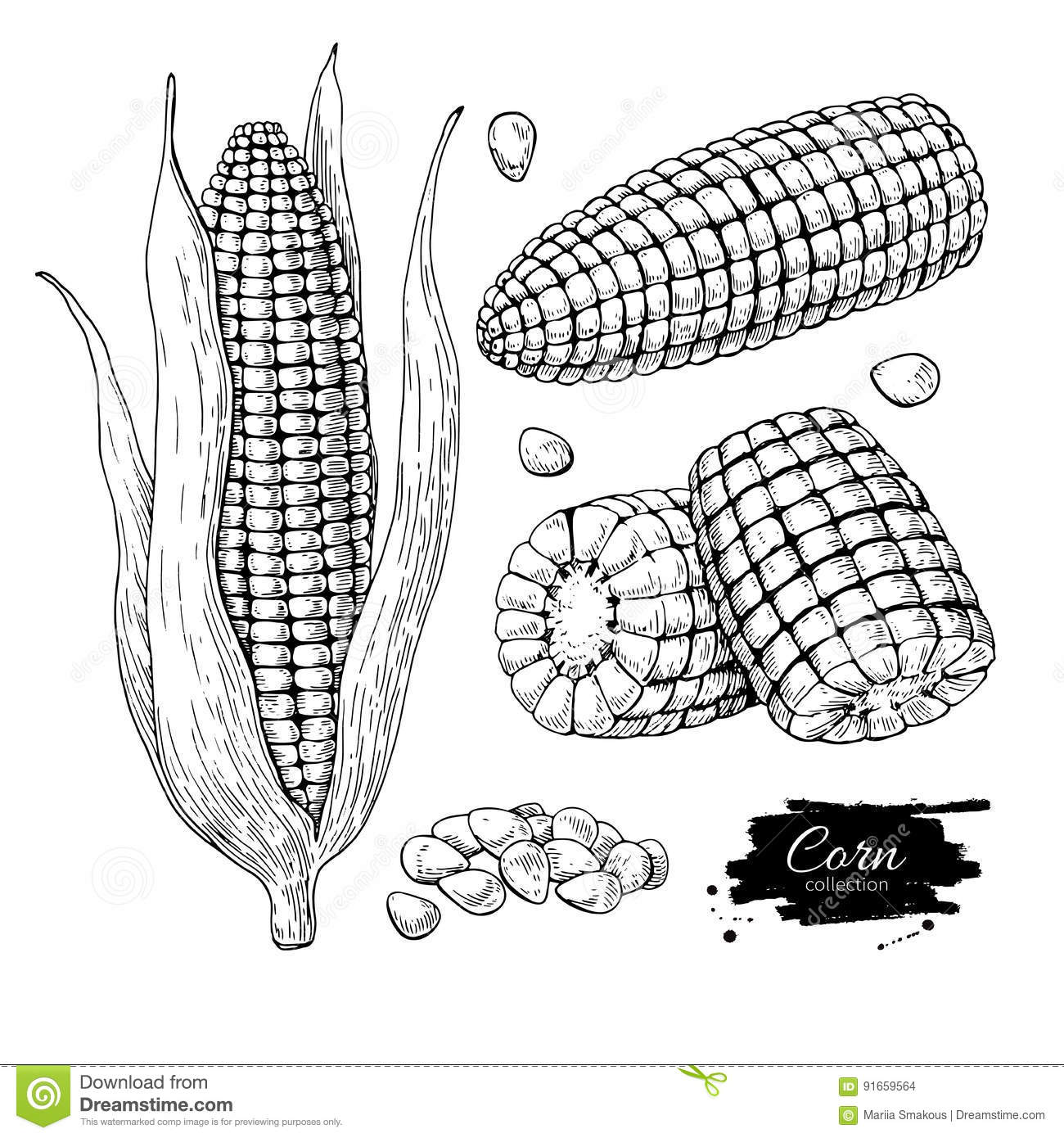 Corn Hand Drawn Vector Illustration Set Isolated Vegetable Engraved Style Object Detailed