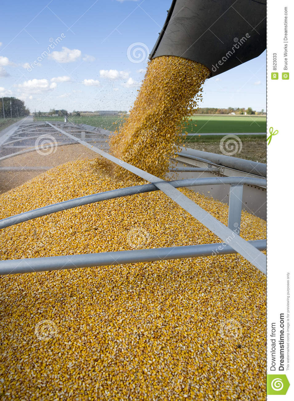 Corn Harvest Stock Image Of Feed Crop Working