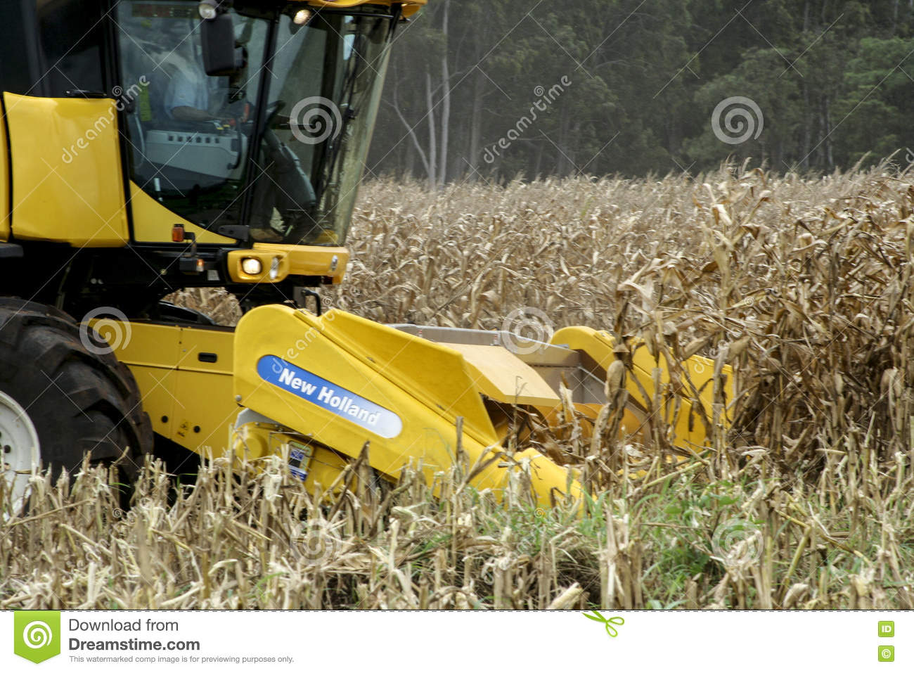 Corn Harvesting Editorial Photo Image Of Countryside