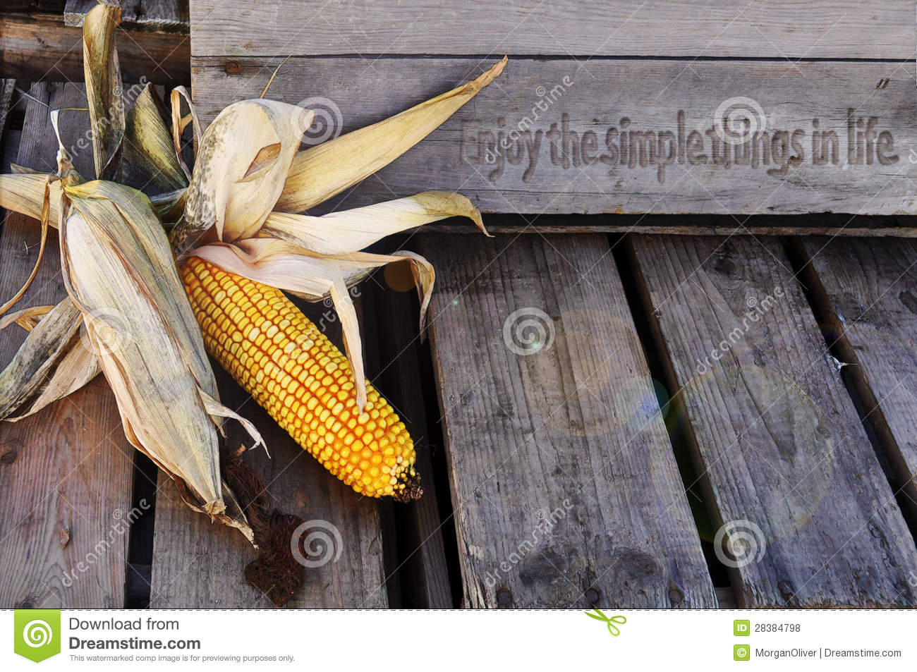 Corn Husks With Enjoy Life Quote Stock Photo Image Of