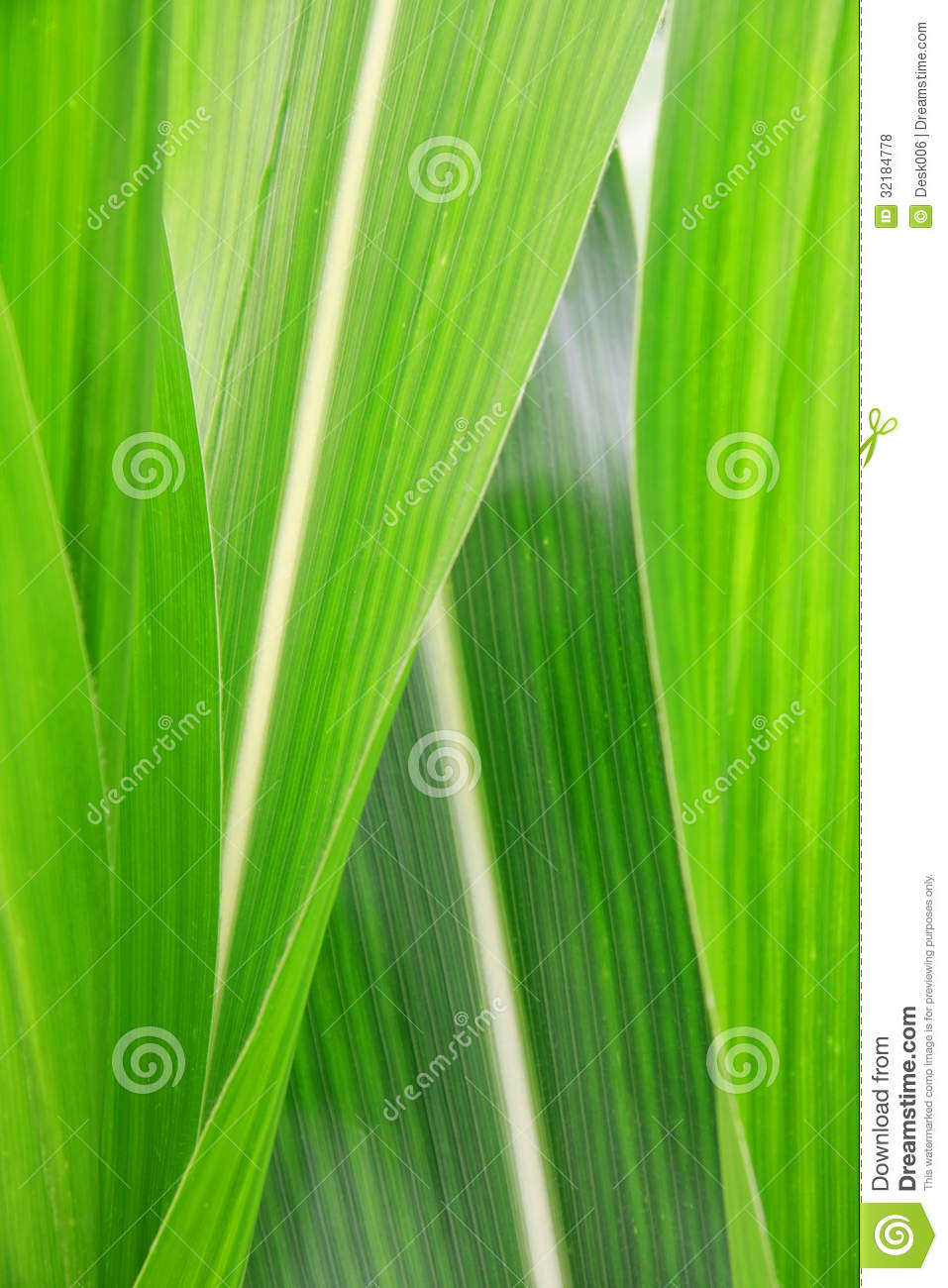 how to keep corn with leafs