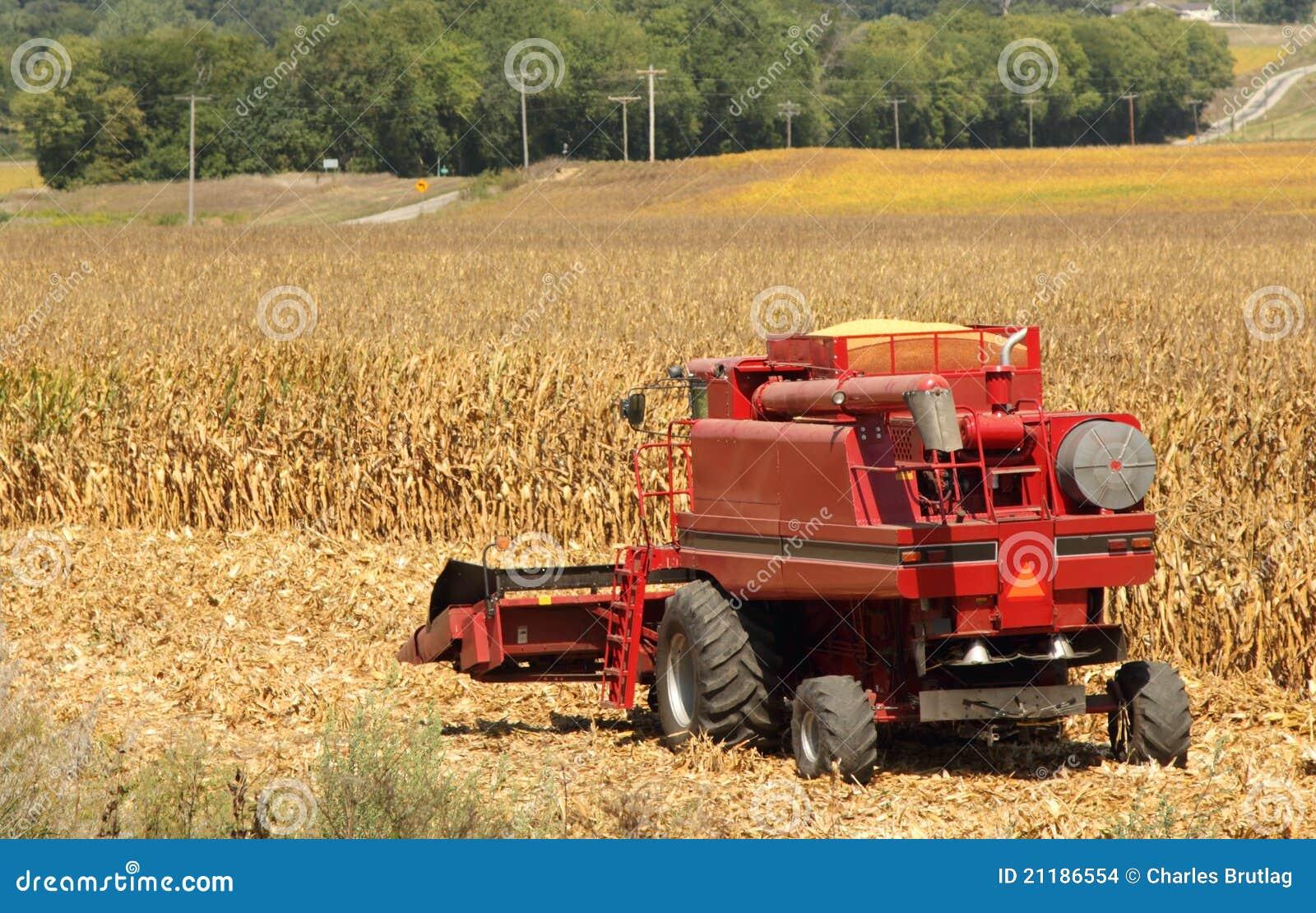 Corn Picking